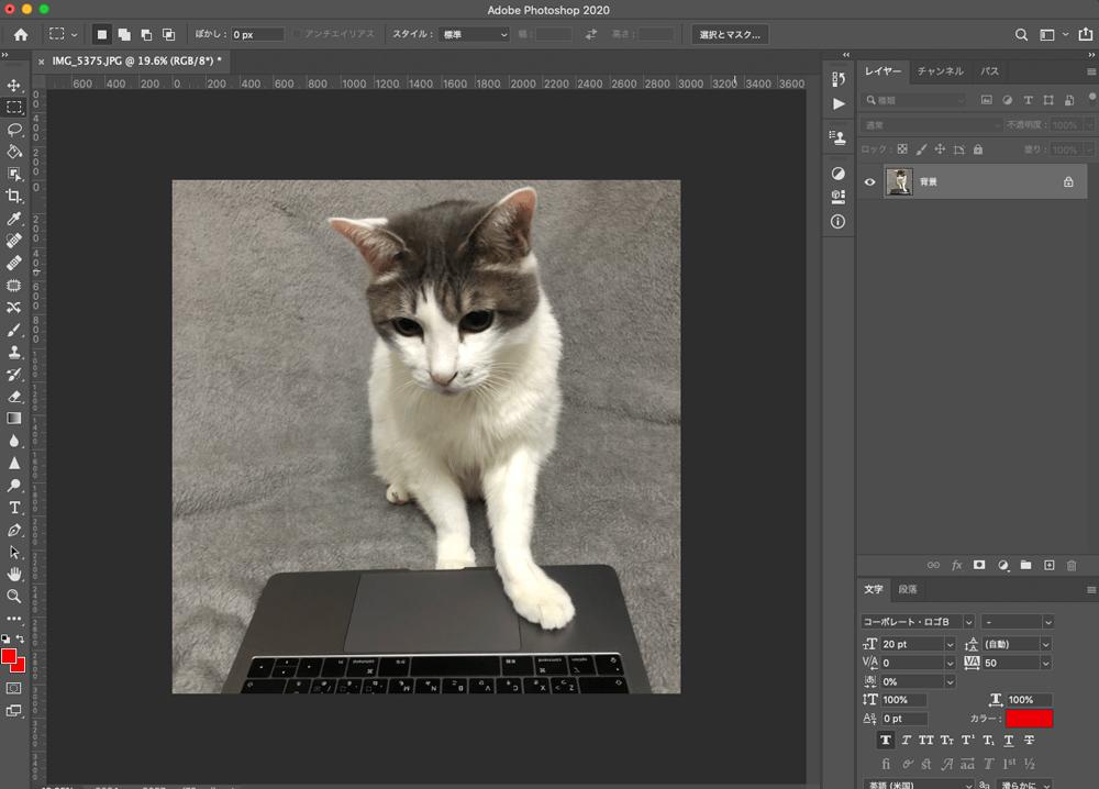 ノートパソコンを触る猫