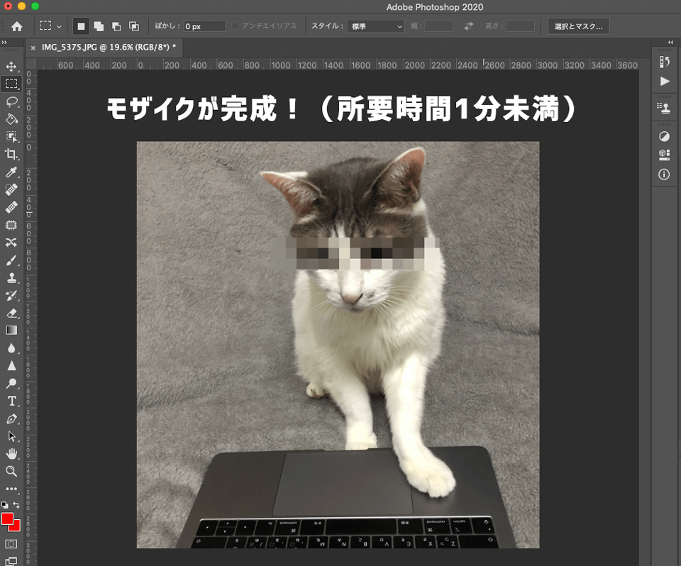 Photoshopに猫の画像にモザイクをかけた状態