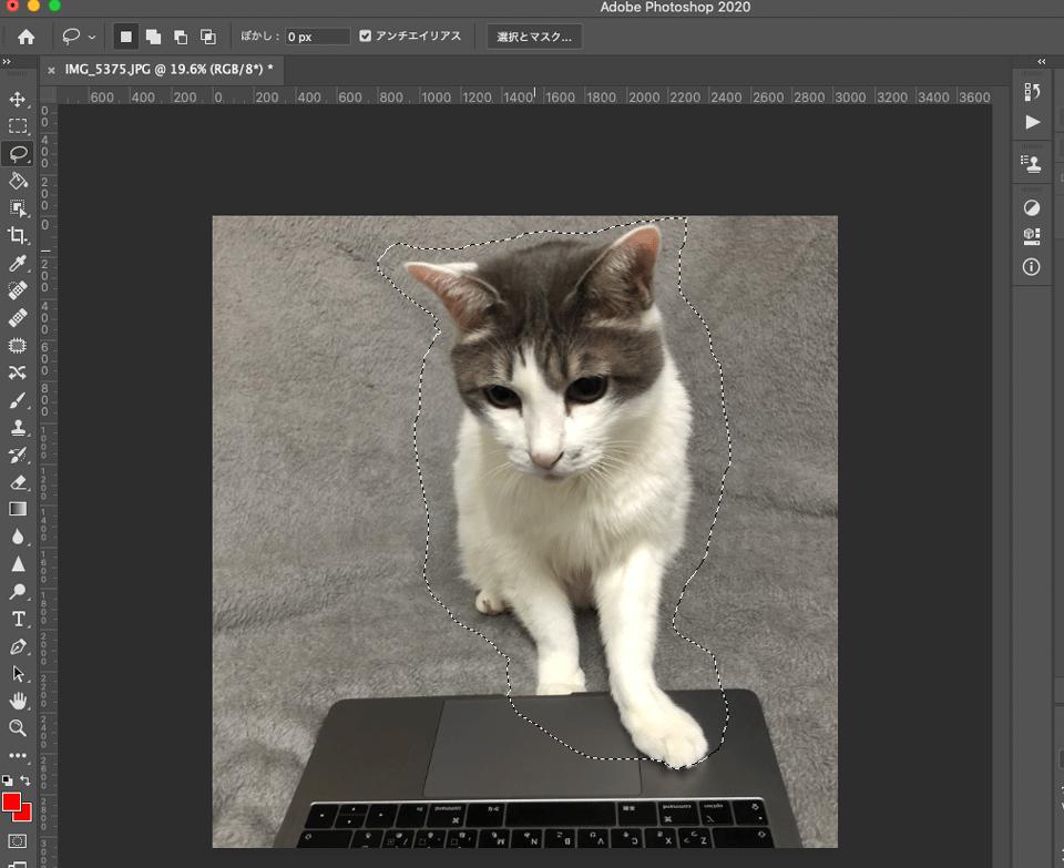 Photoshopで猫の画像に選択範囲を適用