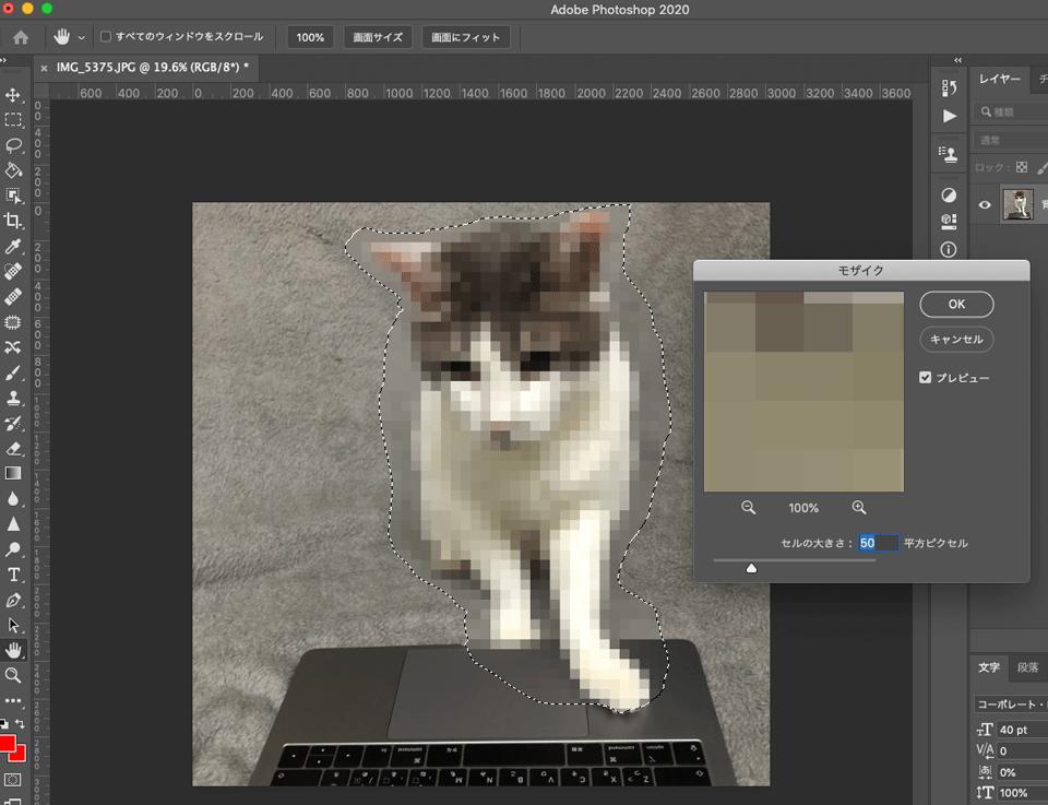 Photoshopで猫の画像にモザイクをかける
