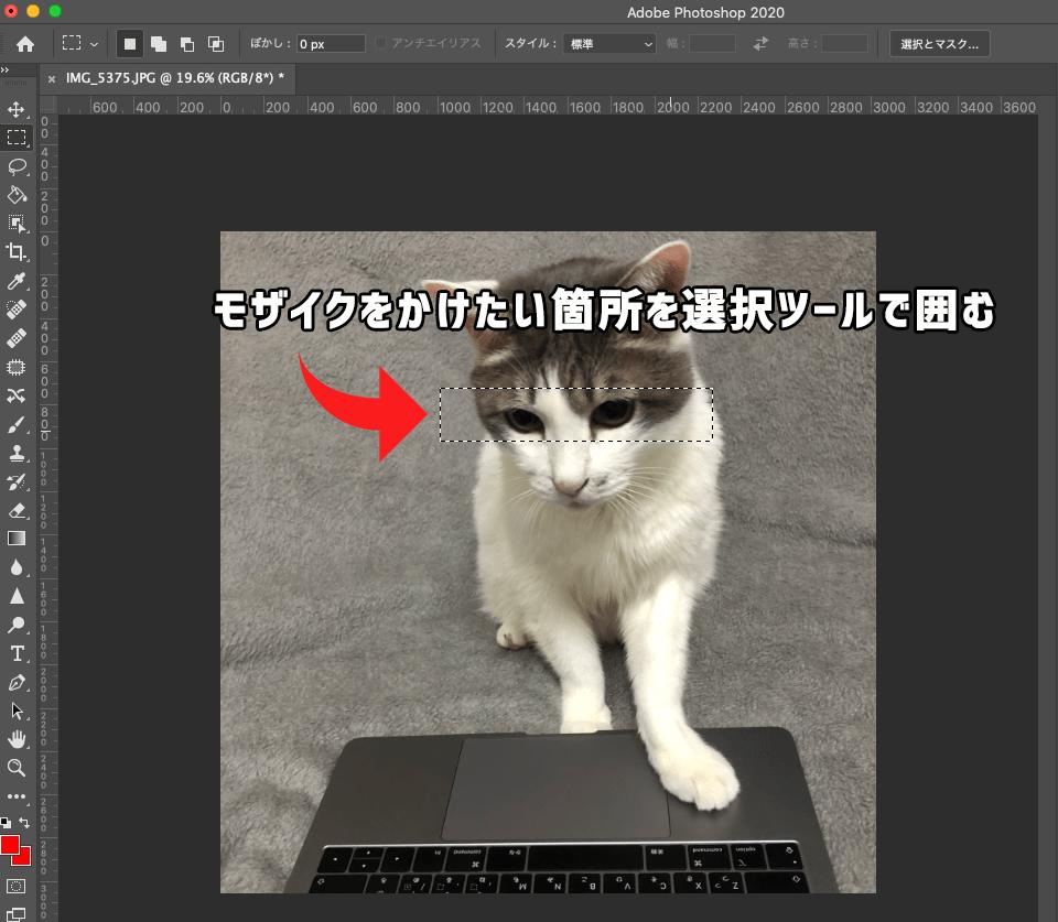 Photoshopで猫の画像にモザイクをかけたい箇所を選択ツールで囲む